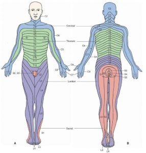 referred pain thigh