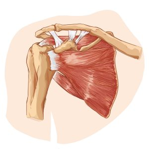 ac joint shoulder