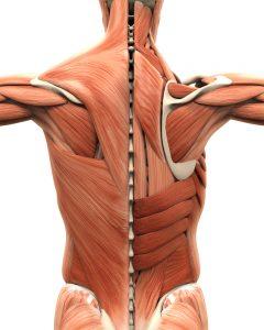 shoulder muscle problem