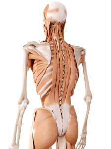 extensor muscle treatment