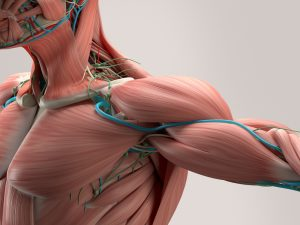pectoral muscle injury