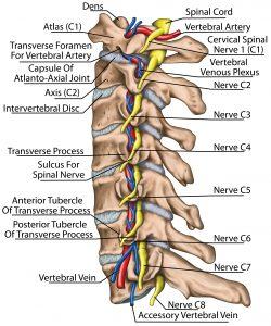 facet joint pain neck