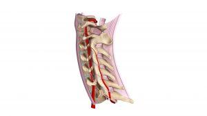 neck ligament problems