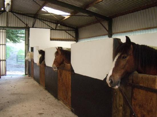 Louise Thompson runs a busy riding stable but increasing debilitation because of long term lower back pain threatened her livelihood until she discovered IDD therapy