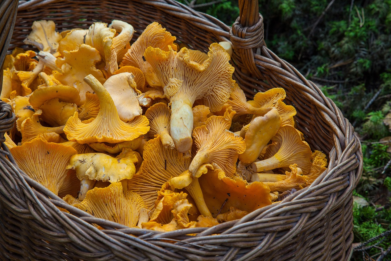 Mushrooms contain Bio-active compounds that protect the Brain from Neurodegeneration