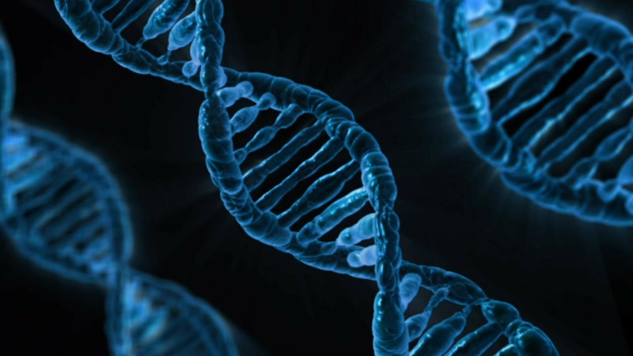 Huntington's Disease; Gene Silencing could turn off Harmful Gene Mutation