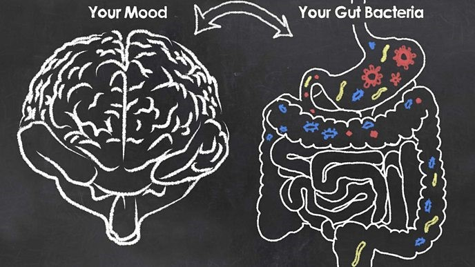 Psychobiotics and How our Gut Bacteria Influence our Mental State