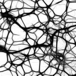 Brain development and gut bacteria biome
