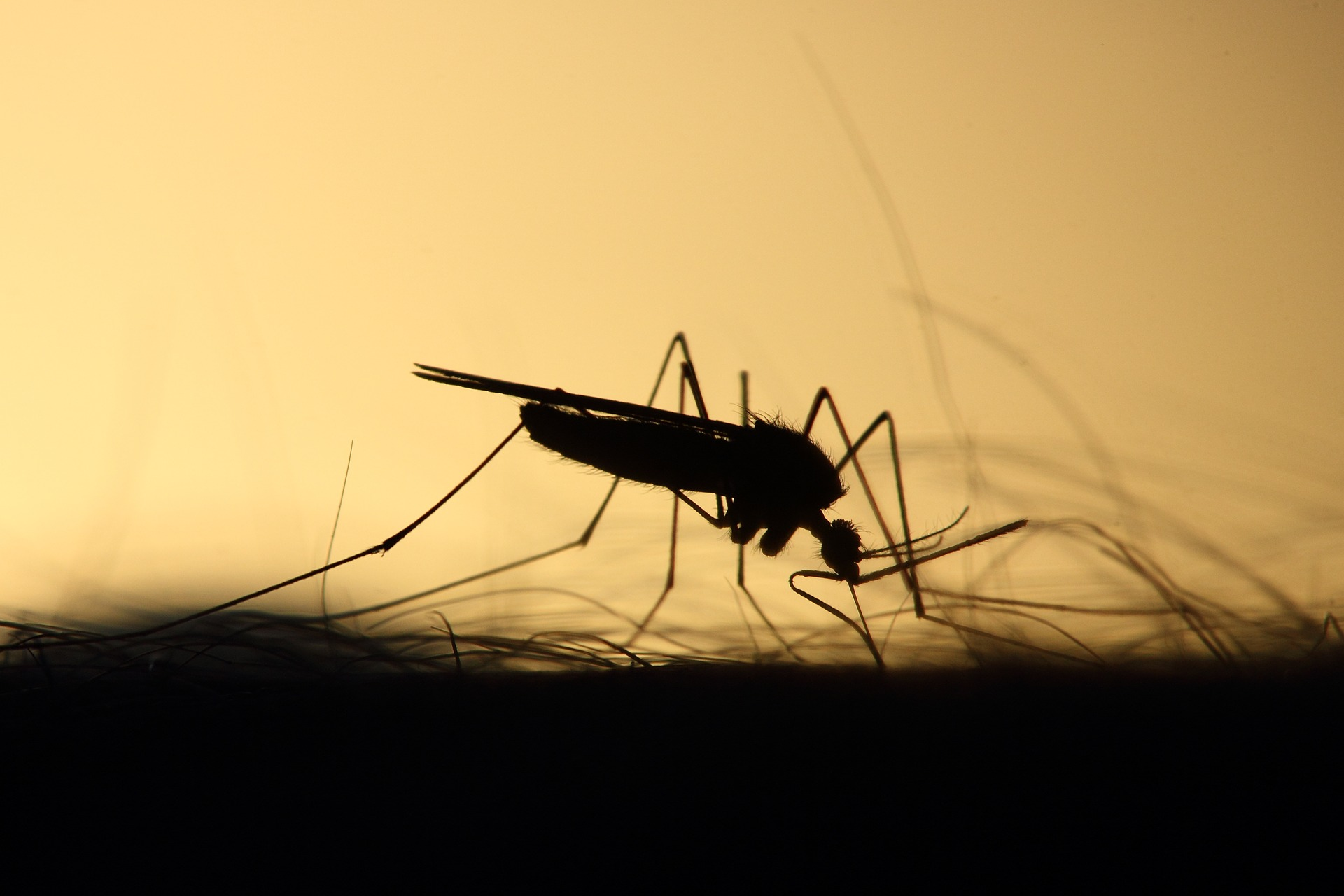 A Natural Solution to Combat Mosquito Borne Diseases offers Huge Potential